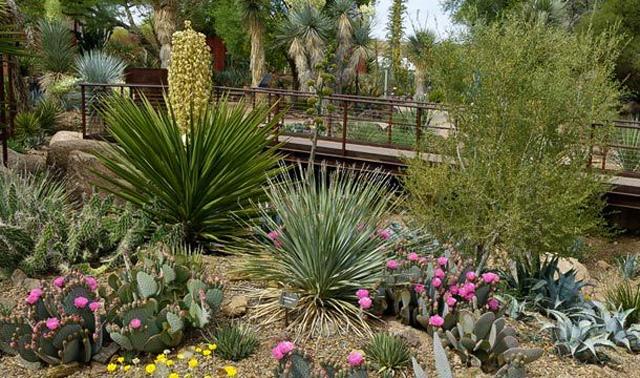 Desert Botanical Garden - Mesa, Arizona