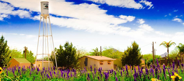 Schnepf Farms - Mesa, Arizona