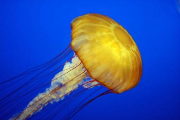 Jellyfish Sting Treatment Options