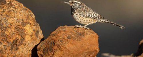 Bird sitting on a rock