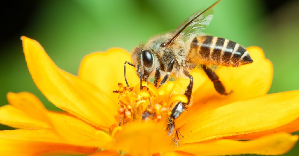 FastMed bee sting